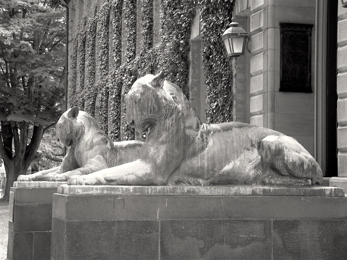 princeton_university_nassau_tigers